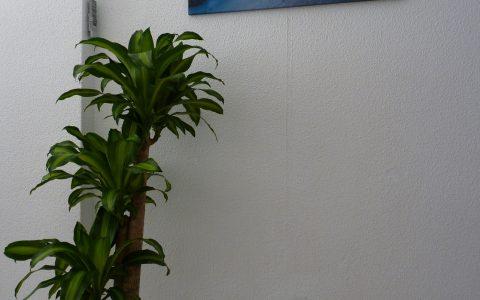 15_desks_back_plant